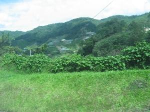 Cool greenery